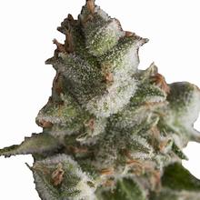 Fresh Candy от 1320 руб. | Alfaseeds.com