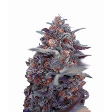 Auto Devil Cream от 1650 руб.   Alfaseeds.com