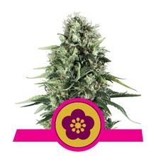 Power Flower от 1440 руб. | Alfaseeds.com
