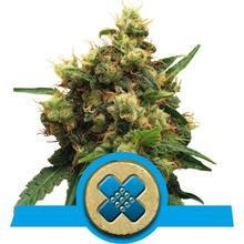 Painkiller XL CBD от 1800 руб. | Alfaseeds.com