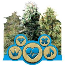 Medical MIX CBD от 1550 руб. | Alfaseeds.com