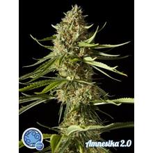 Amnesika 2.0 от 590 руб. | Alfaseeds.com
