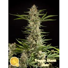 Fraggle Skunk Auto от 0 руб. | Alfaseeds.com