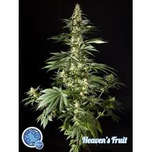 Heaven's Fruit от 590 руб. | Alfaseeds.com