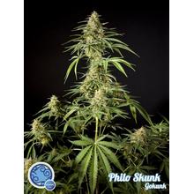 Philo Skunk от 590 руб. | Alfaseeds.com