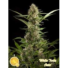 White Yoda Auto от 590 руб. | Alfaseeds.com